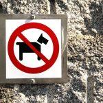 perros no en caminito del rey